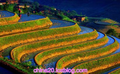 تراس های برنج چین یکی از دیدنی های چین-ویزای چین-تور چین